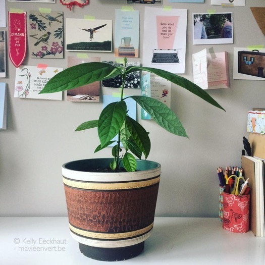 een avocadoplant kweken: zo doe ik het + faq - ma vie en vert