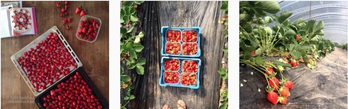 verblijdingen-aardbeien-plukken-zelfoogstboerderij